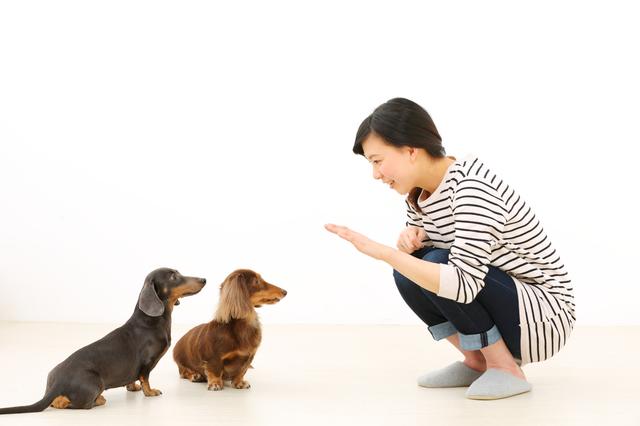 犬のしつけって何種類あるの?はじめに教えておきたい犬のしつけ一覧