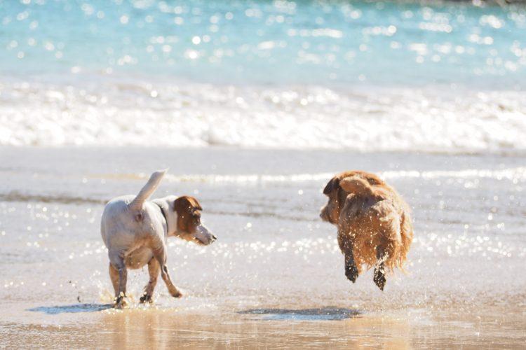 気になる愛犬の健康状態は?すぐにできる健康チェックの方法をご紹介