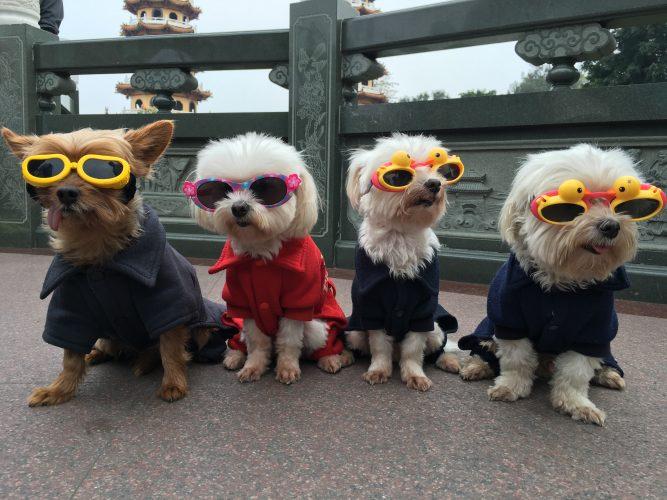 愛犬の健康のためにこれだけはチェック!犬用サプリメント完全解説!